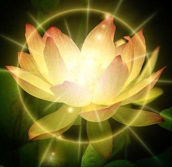 S_LotusLight.jpg